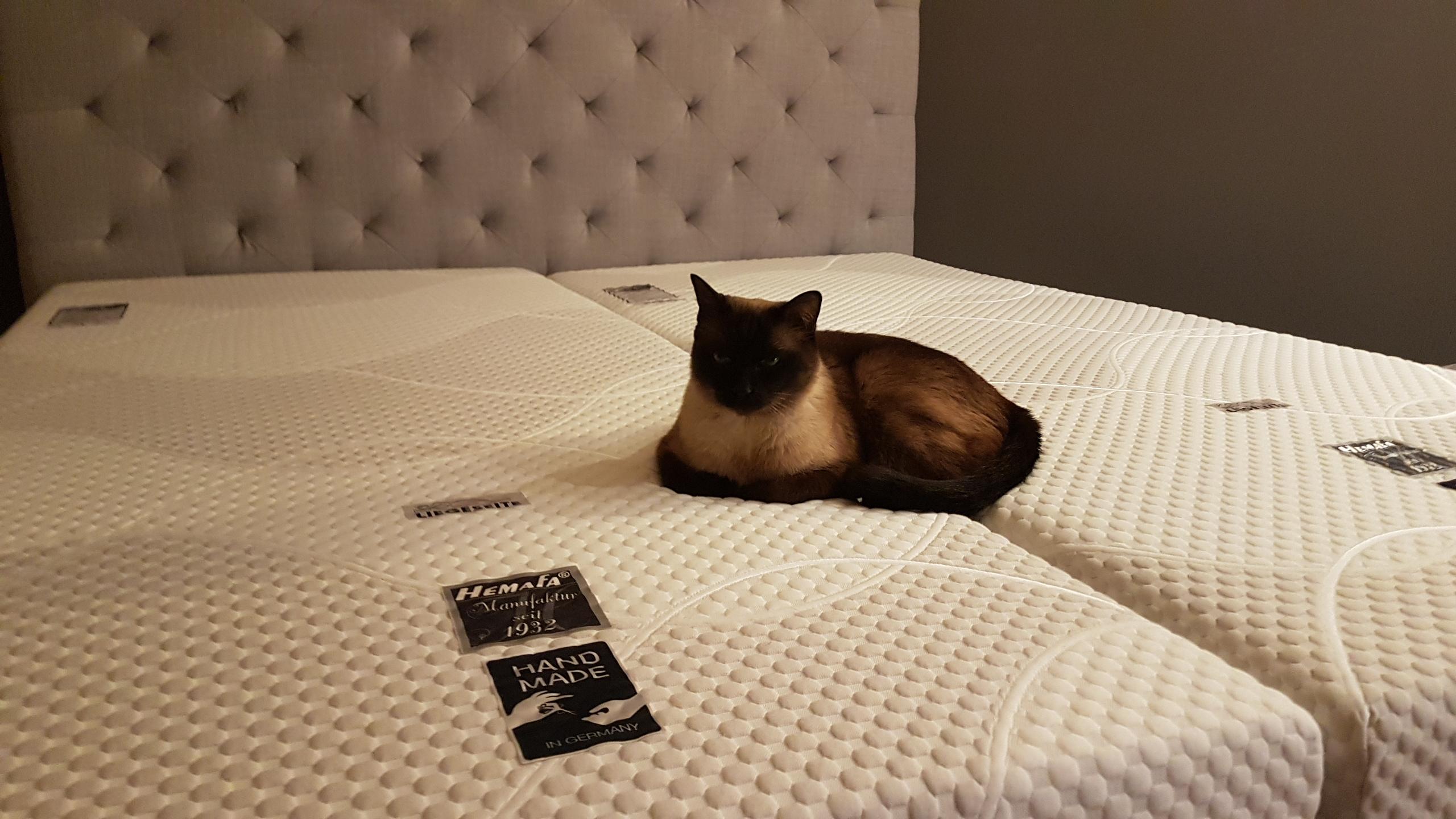 hemafa smaragd 23 watergel 2400 testsieger im top20 test matratzen 2018 gerald malter. Black Bedroom Furniture Sets. Home Design Ideas